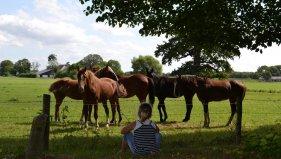 paarden tegenover Jans.jpg